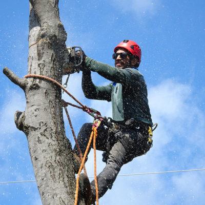 élagage des arbres par Sud élagage abattage Nîmes Montpellier Lunel