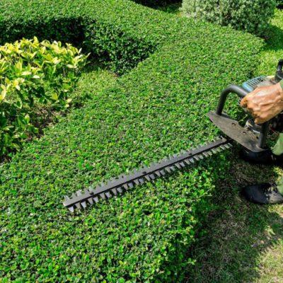 taille haie entretien jardin Sud Elagage Abattage à Lunel Nîmes et Montpellier